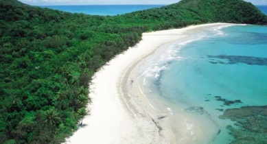1 Day Daintree Rainforest Cape Tribulation 4WD Bloomfield Track Day Tour